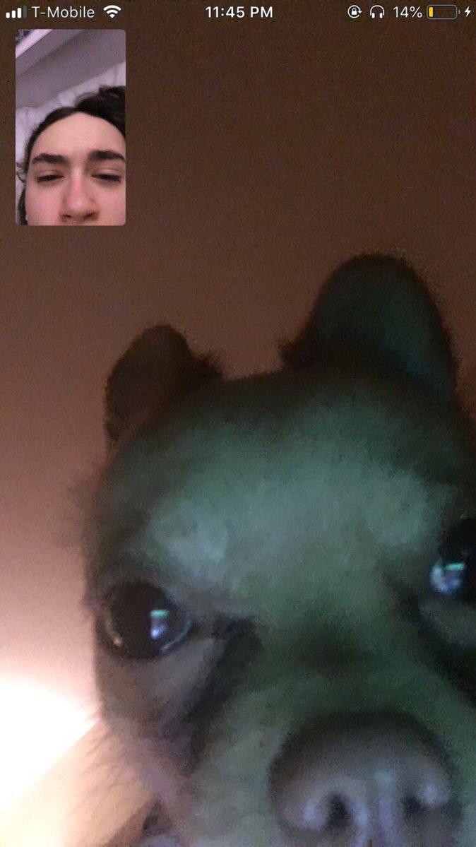 Chat con perro