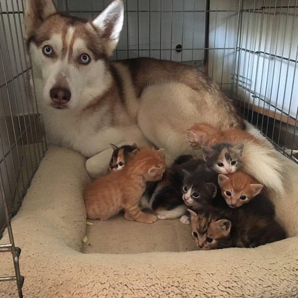 Perro con crías gatos
