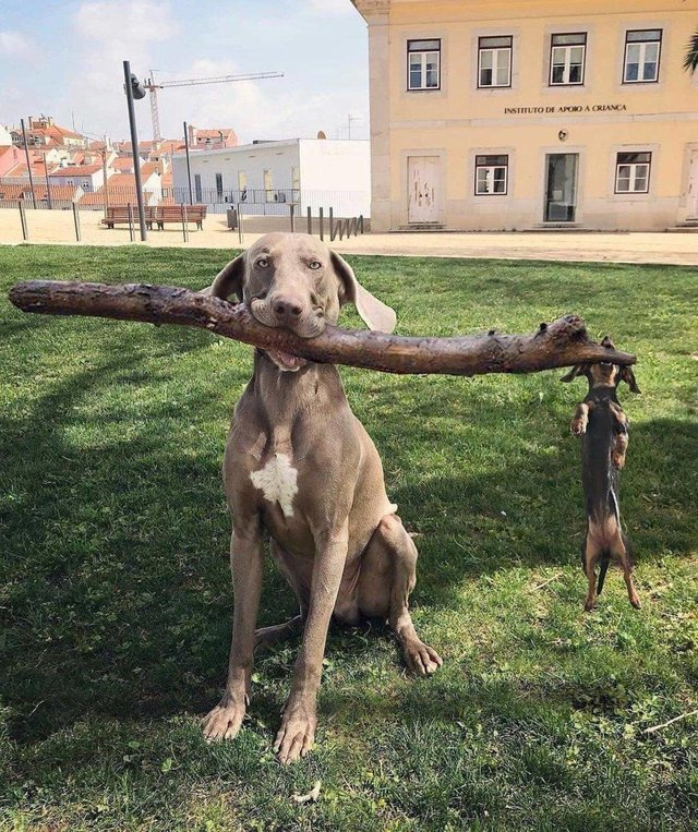 Perro Gerente y Subdirector de sucursal