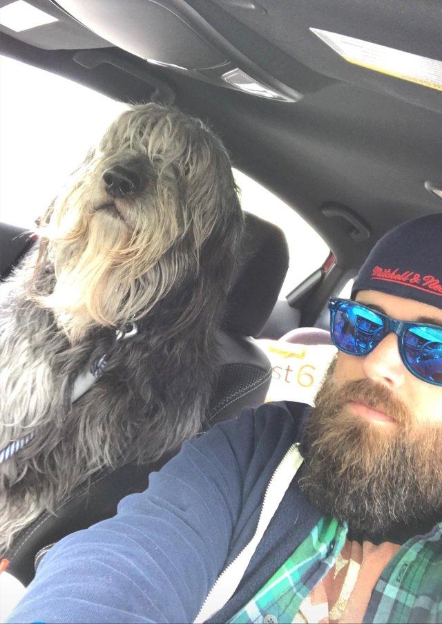 PErro con barba y tamaño de humano