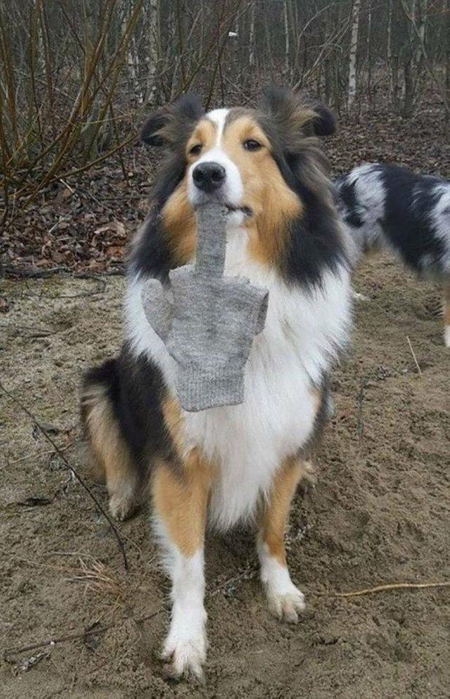 Perro con guante en la boca