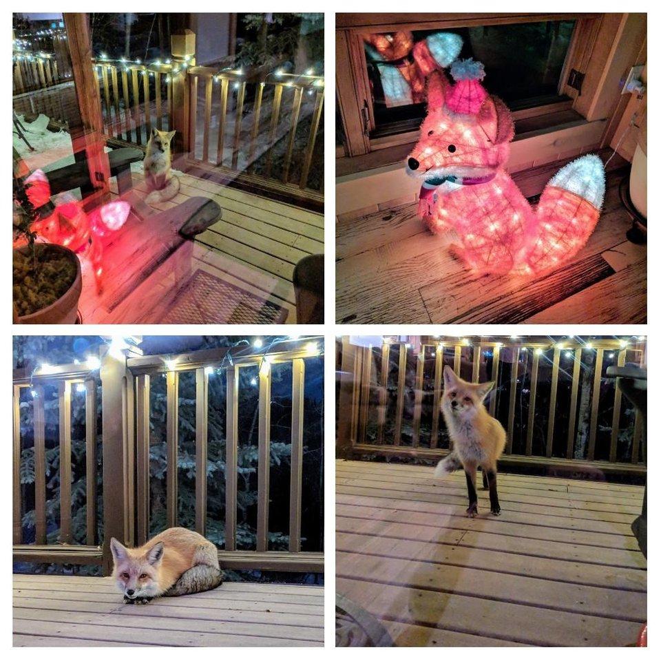 Animales: a alguien le encantó la decoración navideña