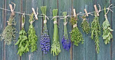 hierbas-aromaticas