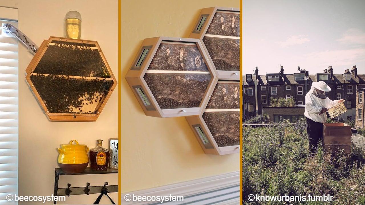 apicultura-urbana-portada