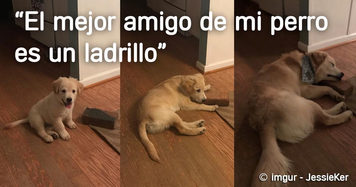 perro fotos divertidas