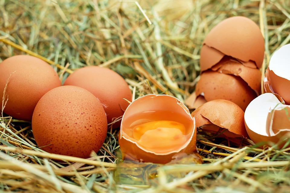 huevos nutricion comida