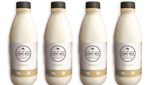 Leche camello lacteo bebida