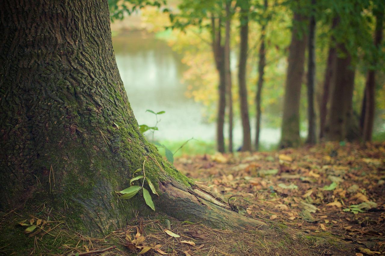 Raiz bosque