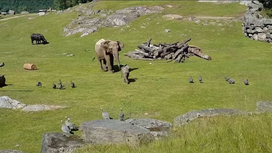 elefante y mamá