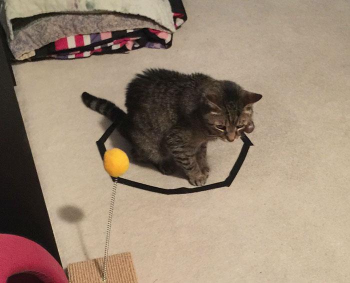 Gato circulo cinta aislante mono