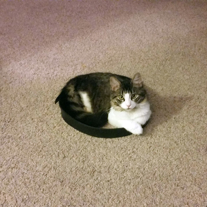 Gato círculo goma atrapado