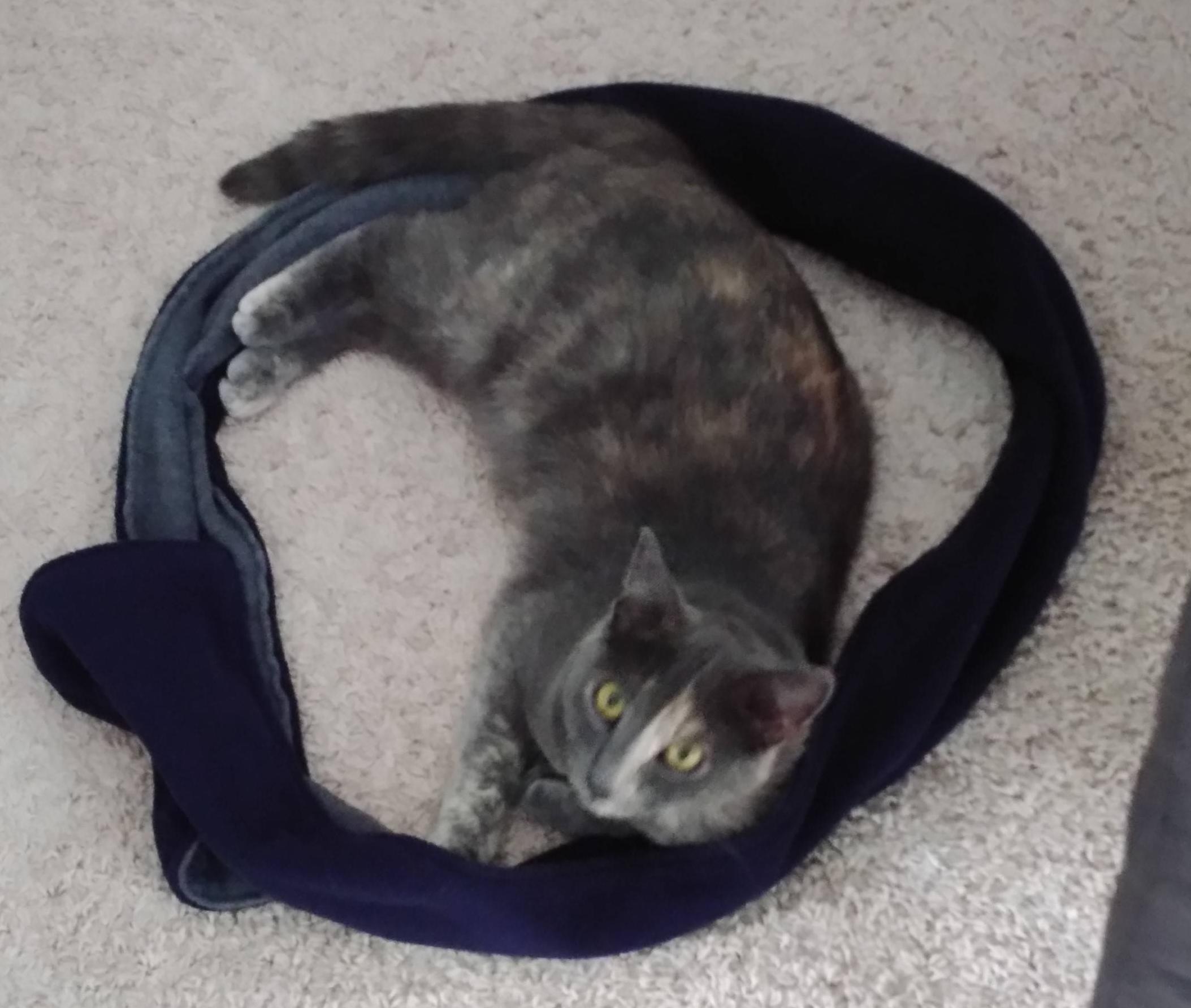gato círculo curiosidad cuerda