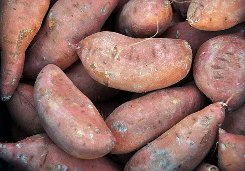 patata dulce boniato caroteno