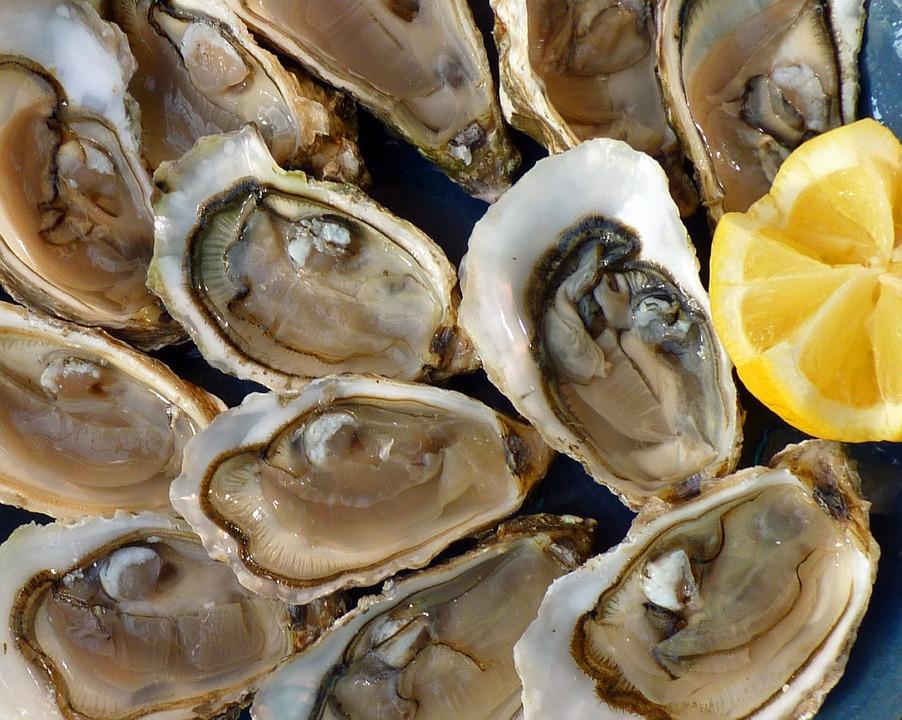 ostras nutrición alimento