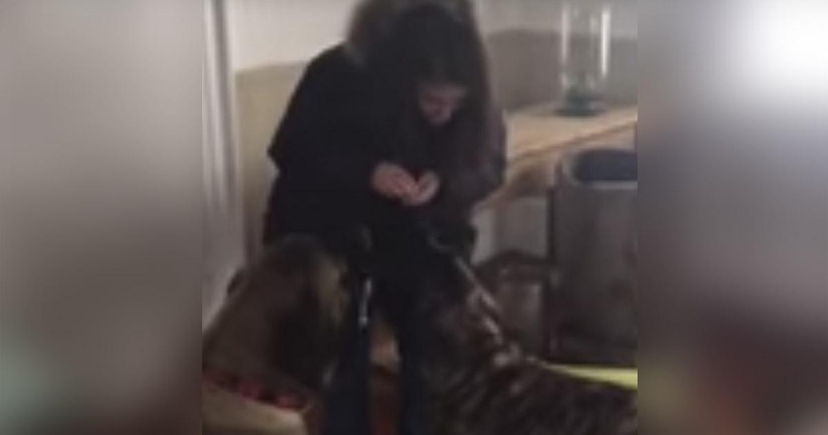 perros-sentandose