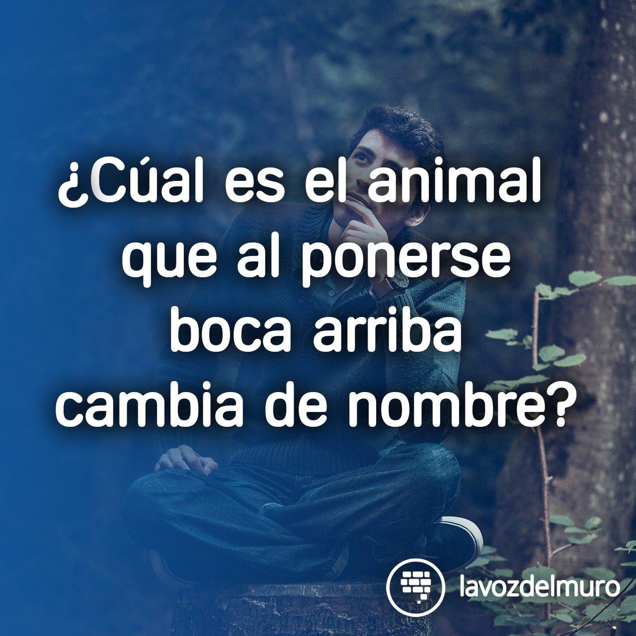 adivinanza animal