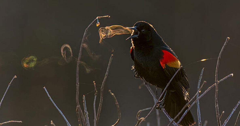 Premios fotografía pájaros