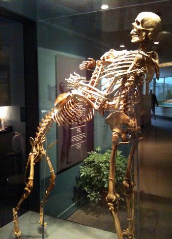 Hombre y perro museo esqueleto