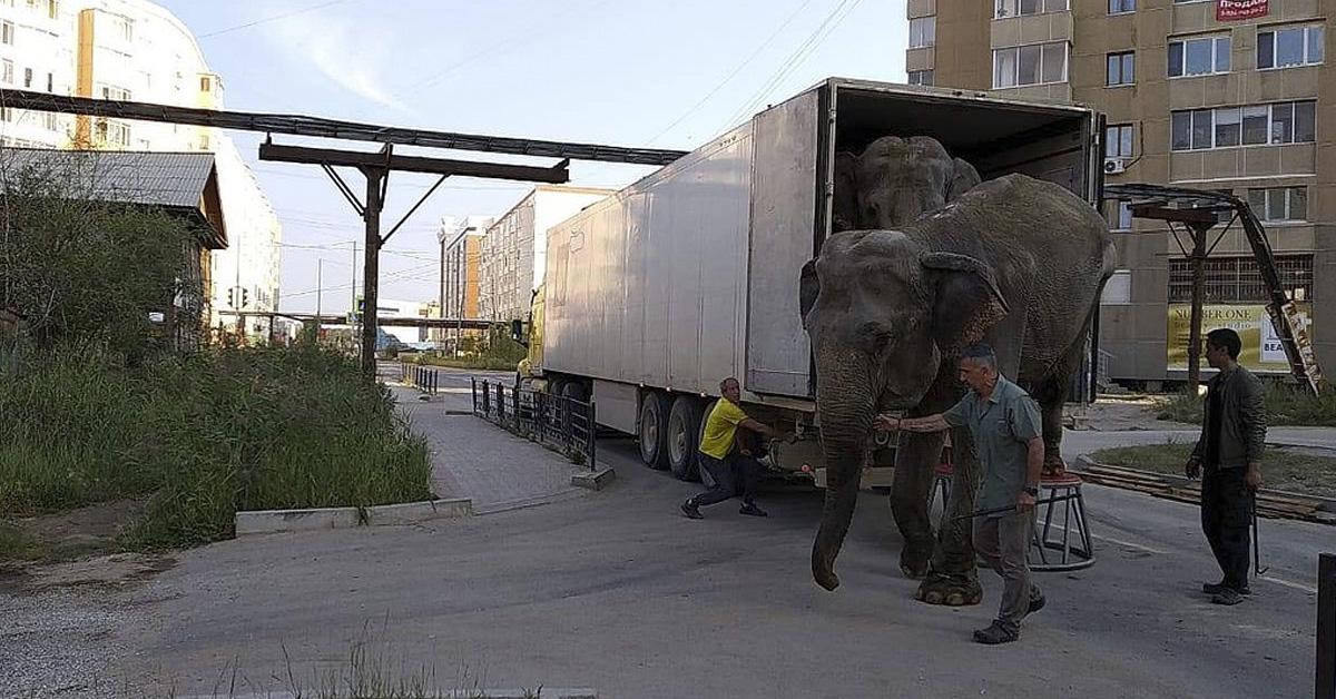 Elefantes-circo