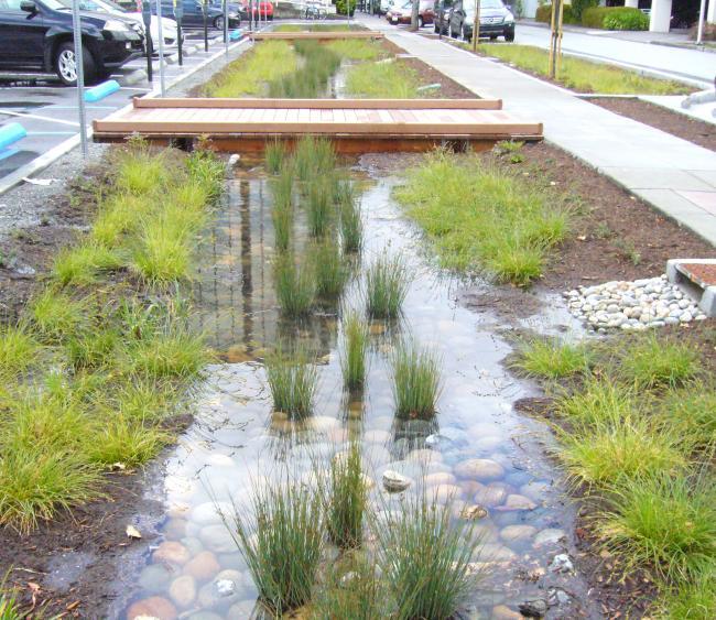 agua hierba