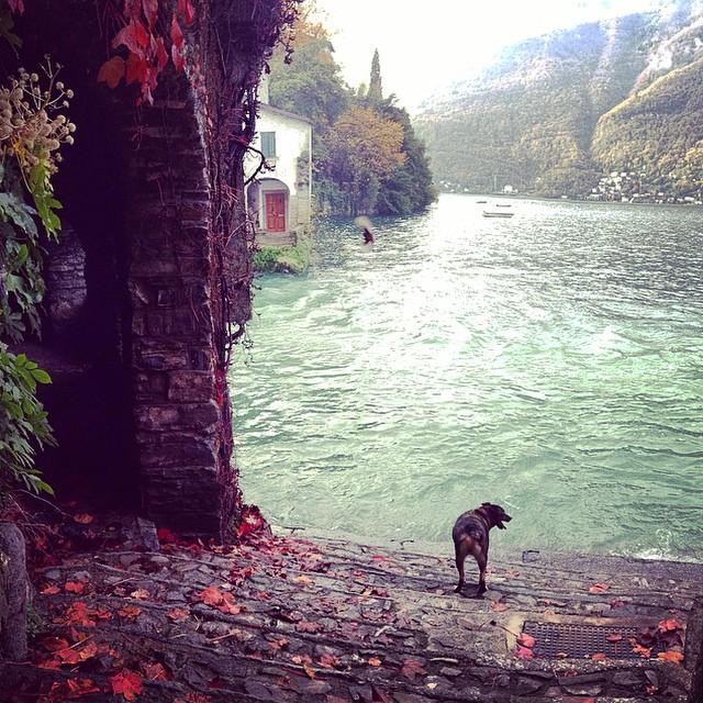 perro frente a lago río