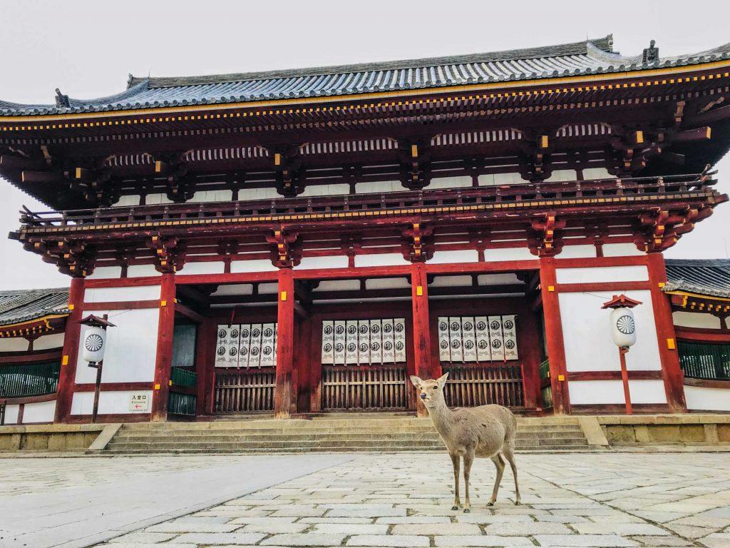 ciervo frente a edificio japonés