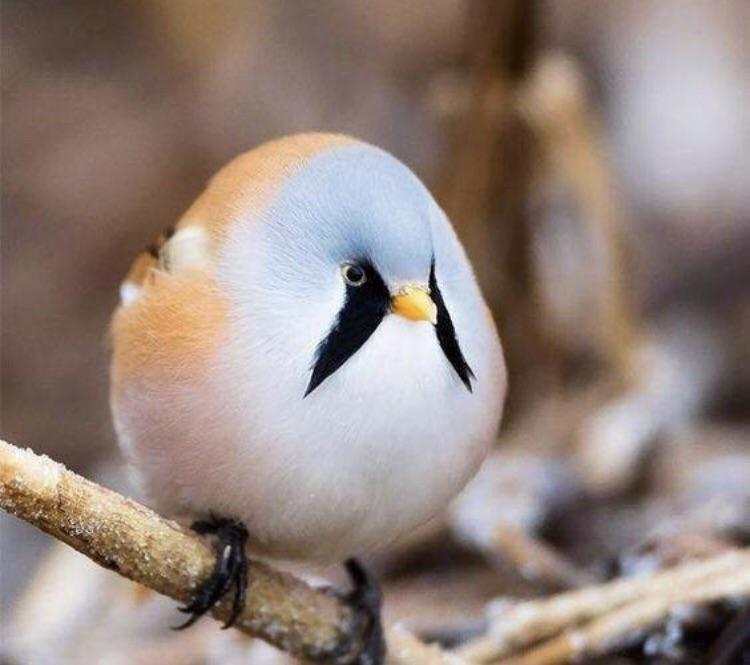 Angry Birds pájaro real