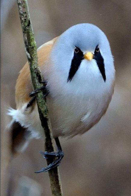 pájaro angry bird