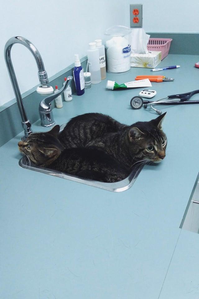gatos escondidos en un fregadero del veterinario