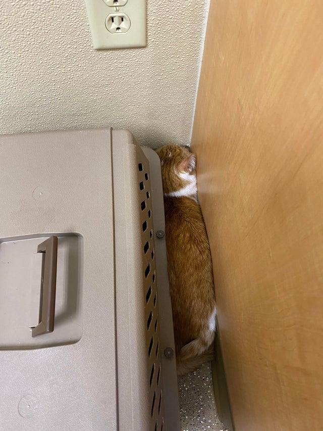 gatos escondiéndose en el veterinario