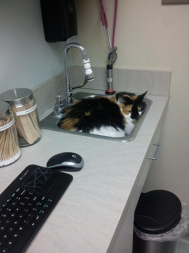 gato metido en un fregadero
