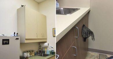 gatos-veterinario