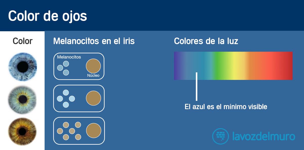 infografia-ojos-marrones