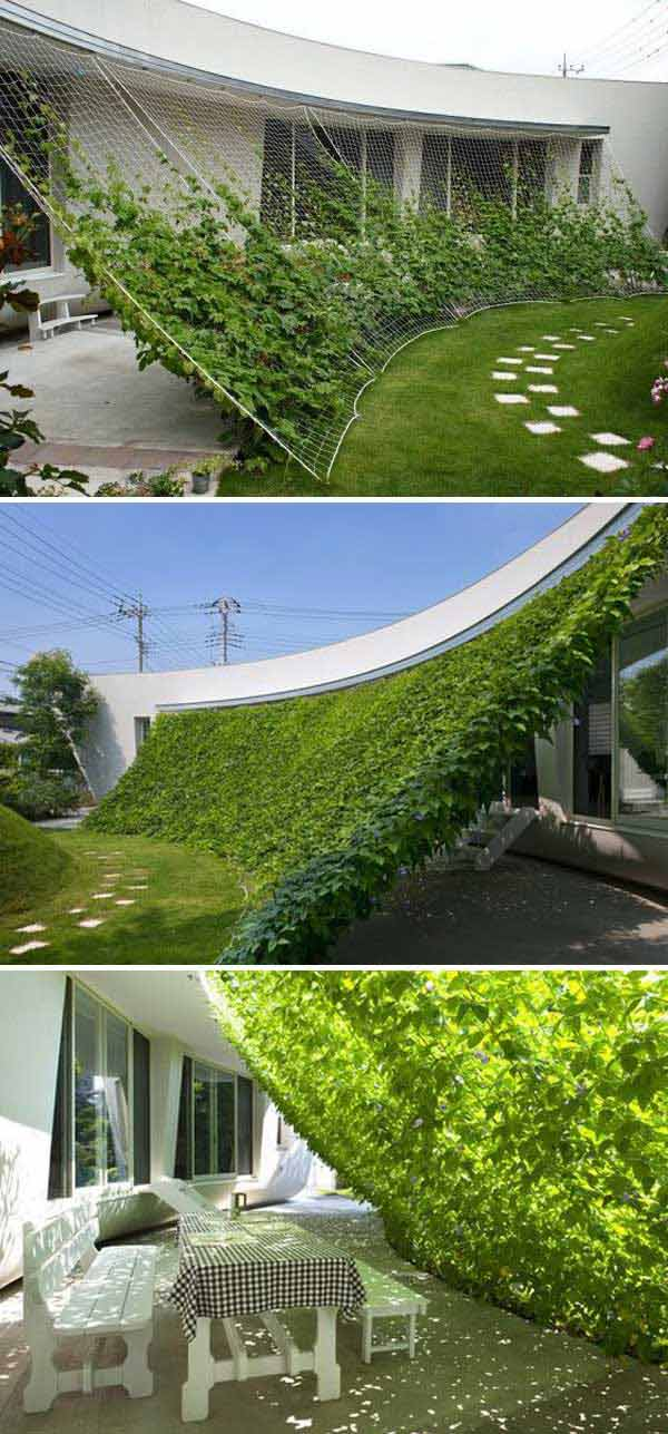 patio con plantas
