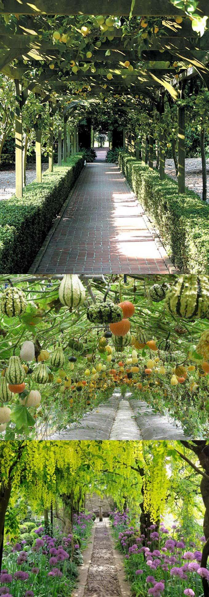 cubierta vegetal para sendero