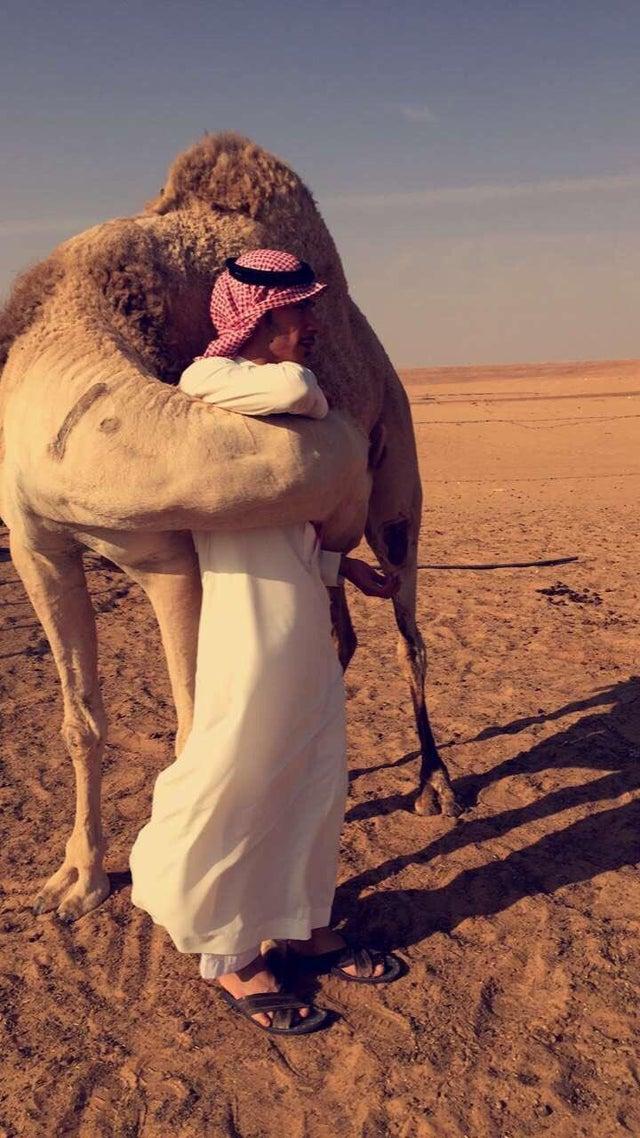 camello abrazando