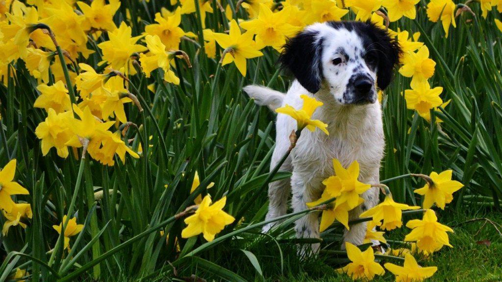 perro flores amarillas