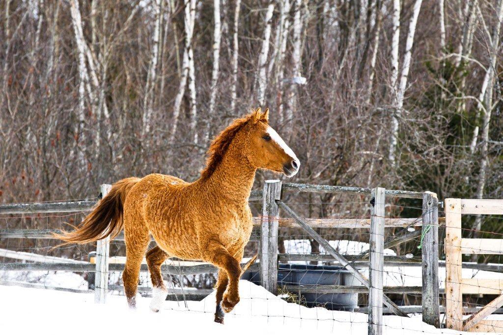 caballo nieve