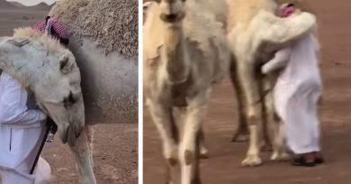 camello-abrazo