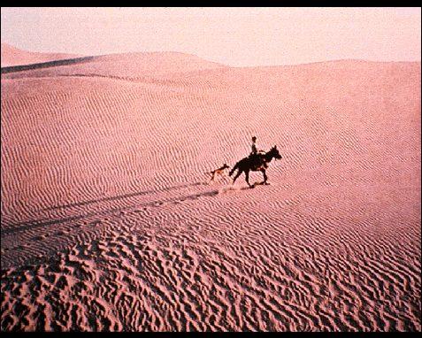 caballo corriendo por el desierto