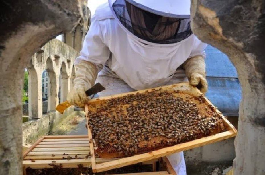 apicultor abeja miel