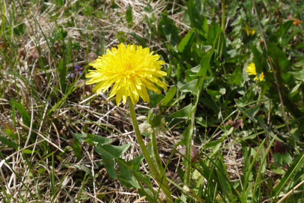 malas hierbas flor