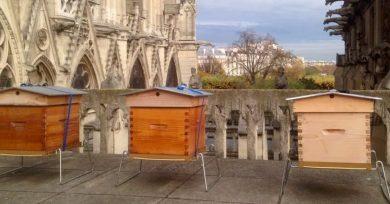 apicultura-urbana