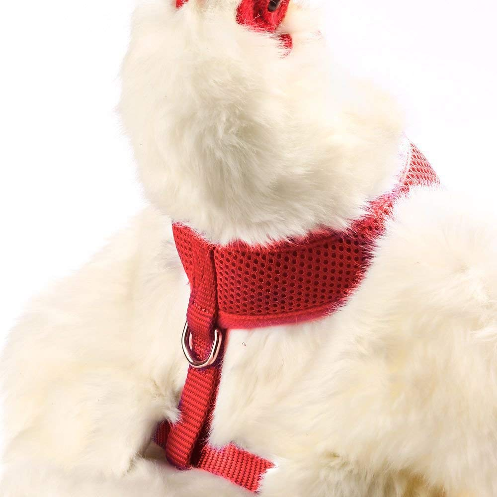 pollo-arnés