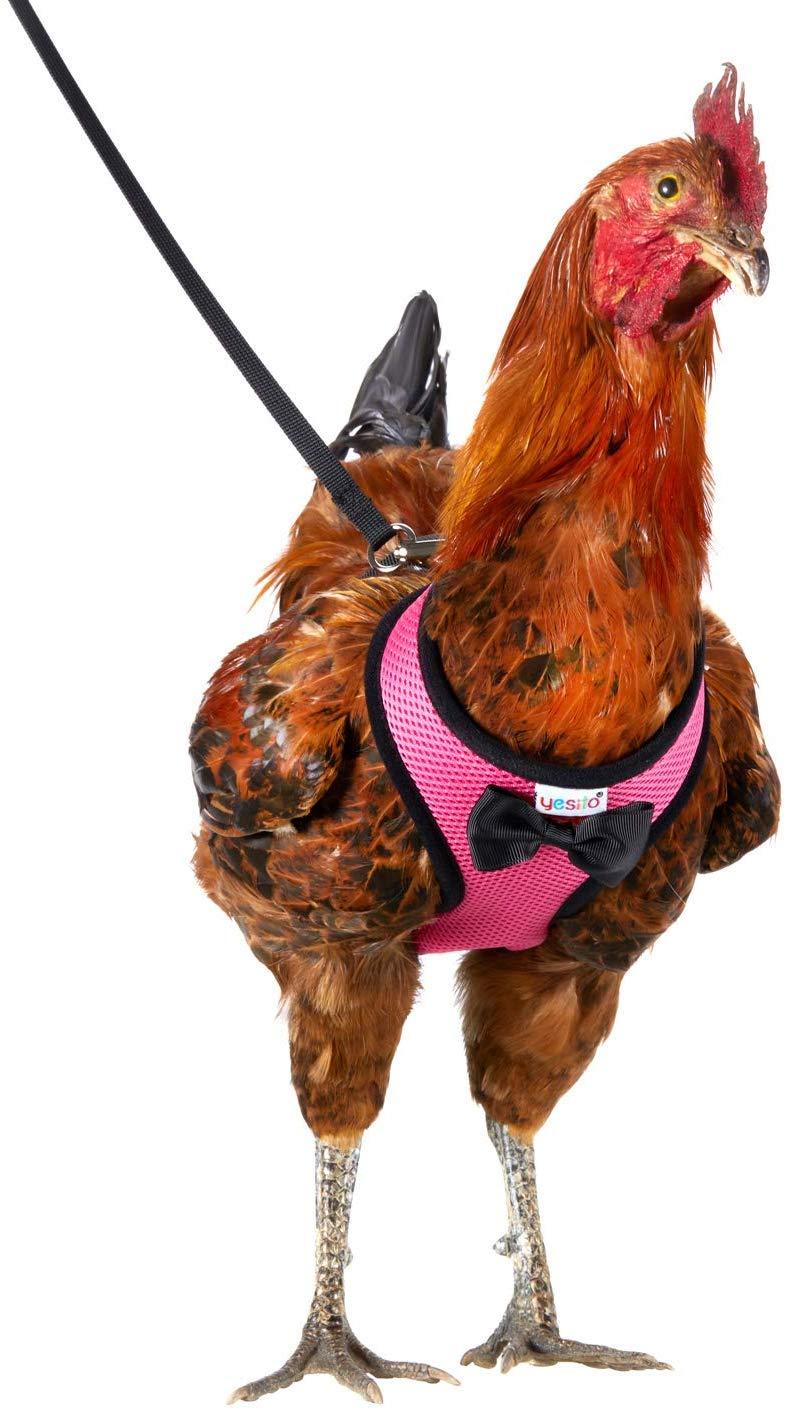 pollo-elegante