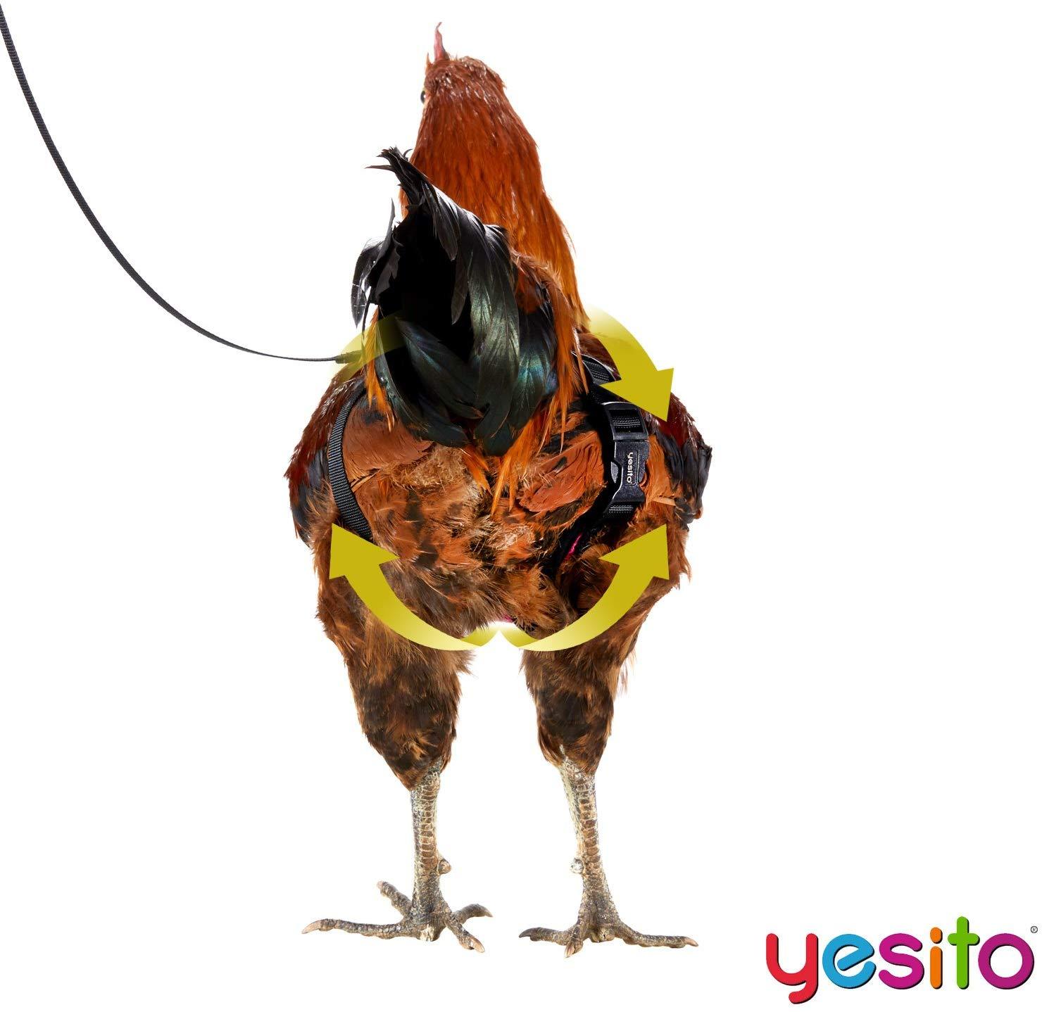 instrucciones-arnés-gallinas