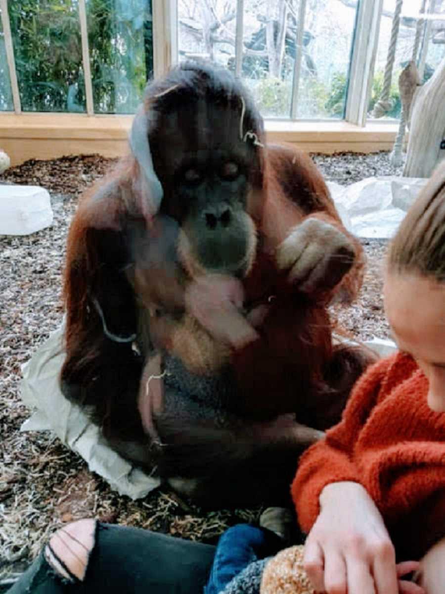 orangutan-madre