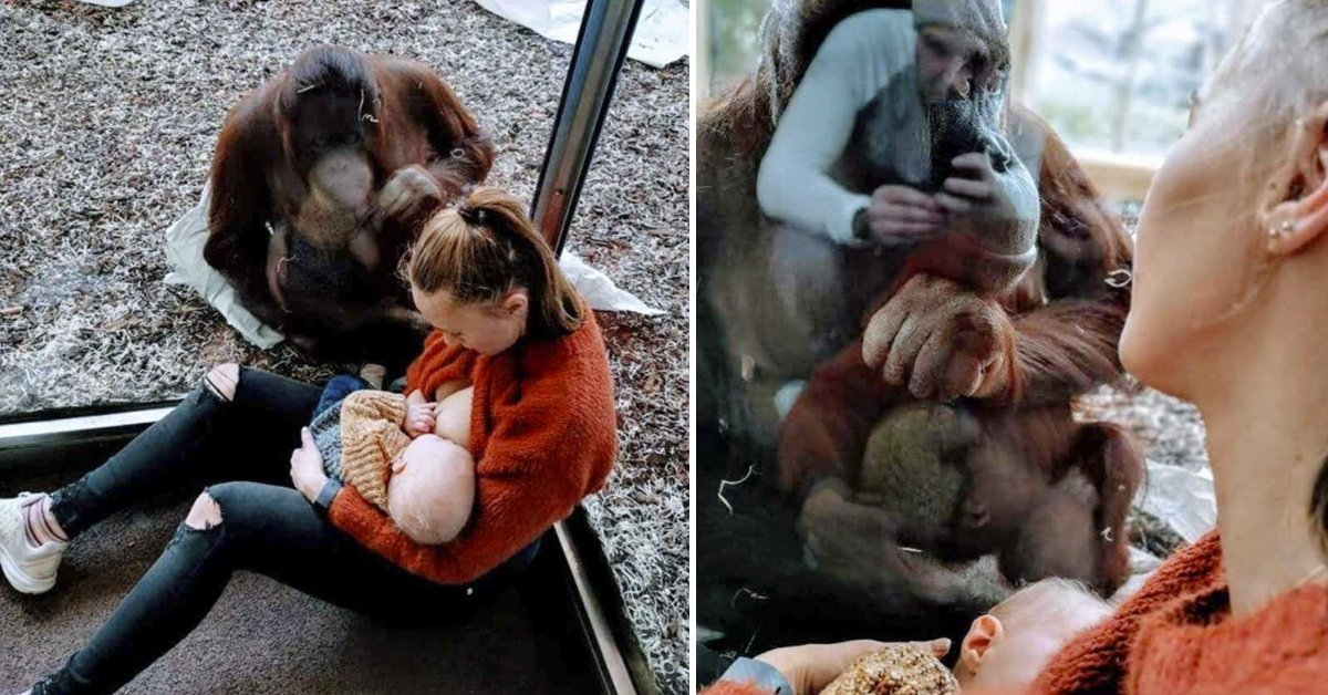mujer-embarazada-zoo