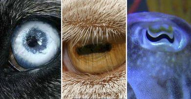 ojos-de-animales