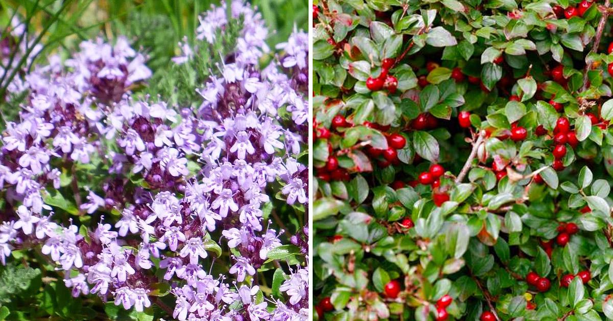 plantas-comestibles